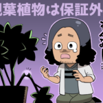 引越し時における観葉植物の保証に関するイメージ