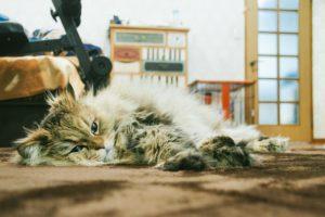 猫がカーペットに寝ている